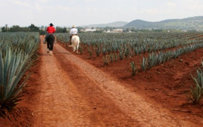 Tequila- worming its way into biofuels