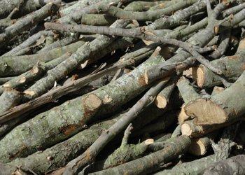 DECC expert wades into biomass spat - Energy Live News