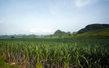 Charity claims biofuel 'land grab' has left thousands hungry in Sierra Leone