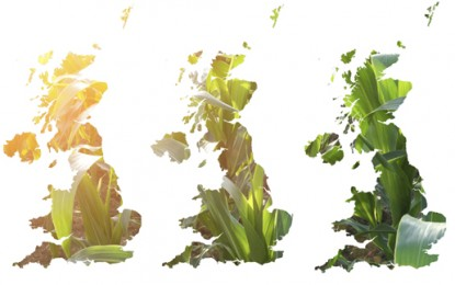 """Europe's biomass appetite """"would eat three UKs"""""""