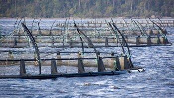 Salmon farming. Image: Thinkstock