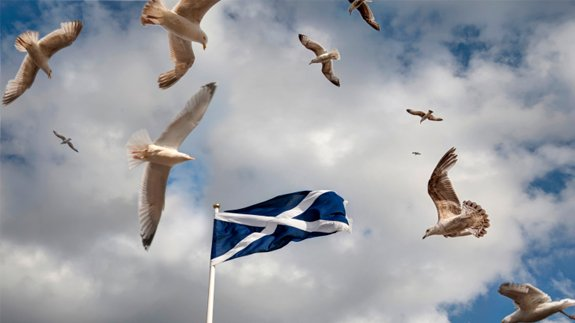 Scottish flag.  Image: Thinkstock