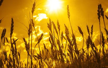 Carbon dioxide goes green to fertilise crops