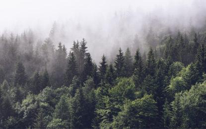 Impacts of EU deforestation 'must not be hidden'