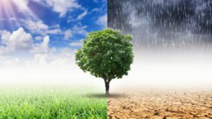 Insurers back climate disclosure for the industry