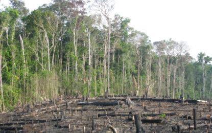 Amazon rainforest 'could face unprecedented deforestation'