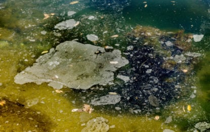 'Global water resources need cleaning' say millenials