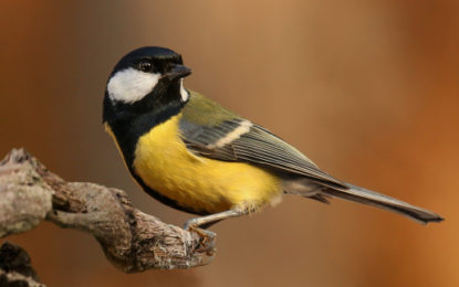 Well-evolved species 'at higher climate change risk'
