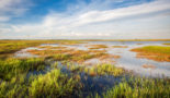 Wetlands 'could prove crystal ball for climate change'