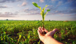 UK biomass crops 'could boost low carbon transition'