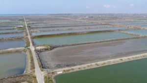 Google to string up solar panels over Taiwan's fishing ponds