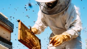 Buzzin' non-profit gives ex-coal miners chance to bee a success