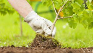 Australia commits to planting a billion new trees