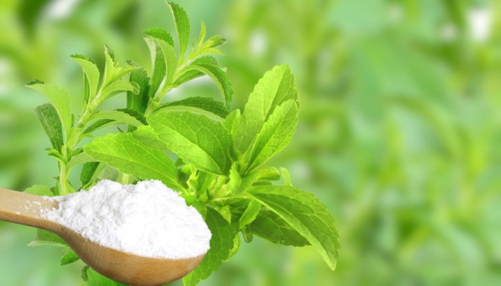Stevia plant and sweetener extract