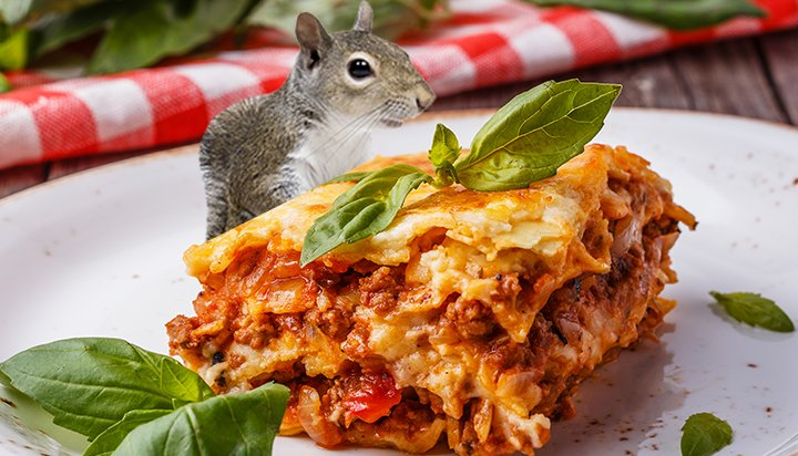 Squirrel lasagne