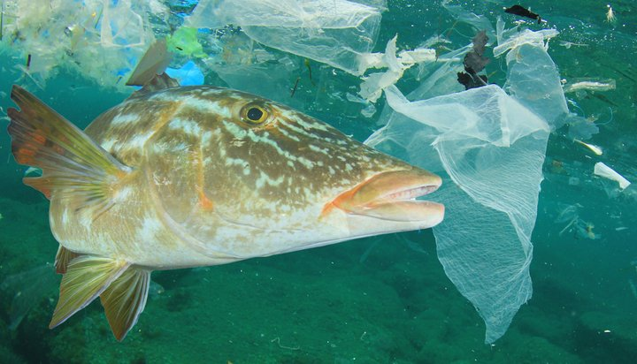 Fish surrounded by ocean plastic