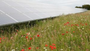 Solar farms 'generate wide range of benefits for local ecosystems'