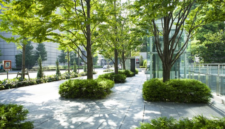 Could urban trees mean we can leaf air conditioning emissions behind? -  Energy Live News
