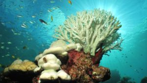 Climate change has put the Great Barrier Reef 'in serious trouble'