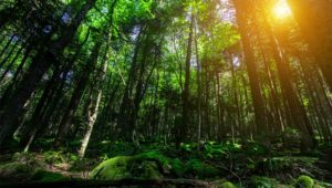 New $7.1m forestry project to help nations meet climate change commitments