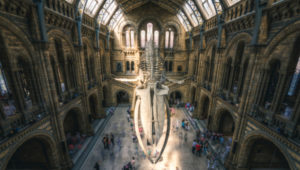 Natural History Museum declares planetary emergency