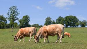 Scottish farmer-led group beefs up against climate change