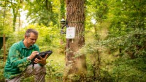 UK forests to transmit data to ring the alarm on climate change