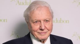Has the 'Attenborough effect' led to a 53% fall in single-use plastic use?