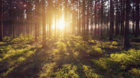 UN: Healthy ecosystems can provide 37% of climate solution