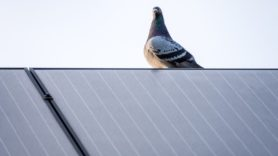 'Avian incident' knocks 84% of US solar farm off the grid