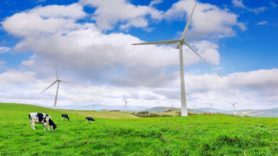 Could wind turbines be killing cows?