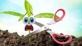 Plants 'scream' when being cut