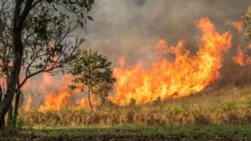 Australian bushfire emissions since August reach 250 million tonnes